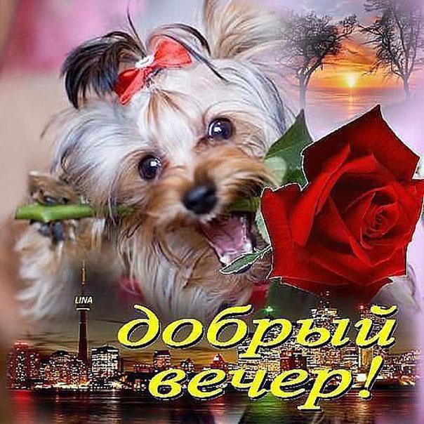 Добрый вечер с розами открытка
