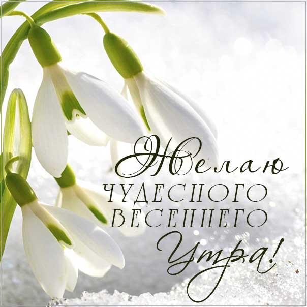 чудесного весеннего утра, весеннее утро, картинка доброго утра, подснежники весна, картинка с надписью доброе утро, отличного настроения, позитивного утра, чудесного утра