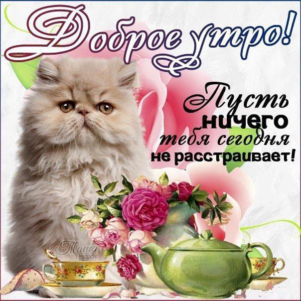Добрым утром приветствие котик с пожеланием