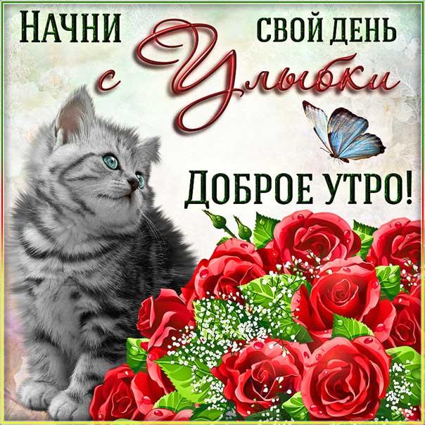 Открытка доброе утро. Со словами замечательного, позитивного, классного утра, котик, розы, сияние, котенок, мигающие, стихи, картинки про утро пожелать.