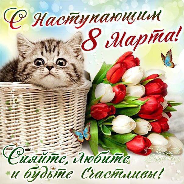 8 марта открытка цветы и котик