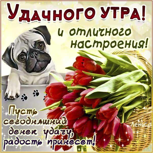 Веселая картинка доброе утро. Со словами позитивного утречка, собака, цветы, лучшего дня, цветы, мигающие, стихи, картинки желаю, отличного настроения, открытка.