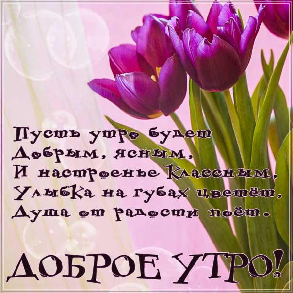 доброе утро, красивое утреннее пожелание, позитива на день, утренняя улыбка, чудесного настроения, тюльпаны утро картинка