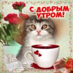 Девушке открытка с добрым Утром