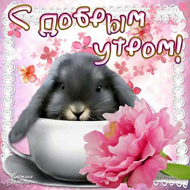 Утро розовая
