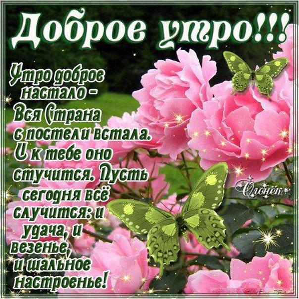 Доброе утро стихи, цветы