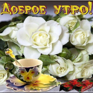 С добрым утром цветы